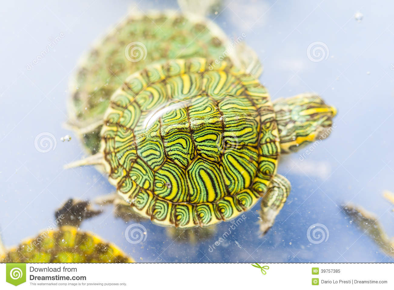 Pet turtle stock image. Image of above, armor, shell ...