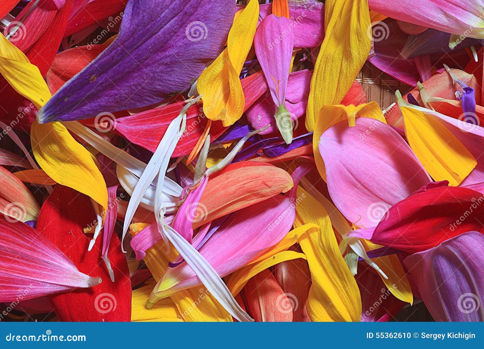 Petali del fiore