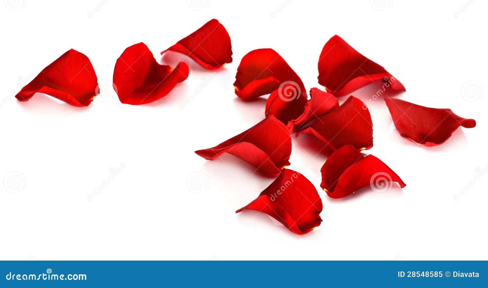 Red rose petals clip art