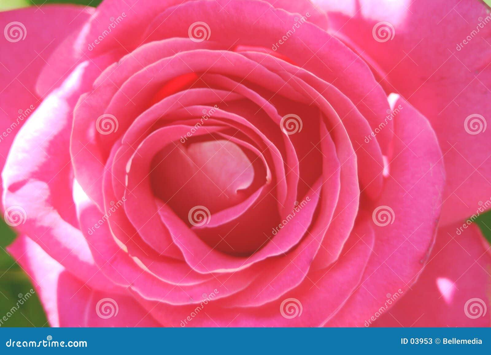 In the petals