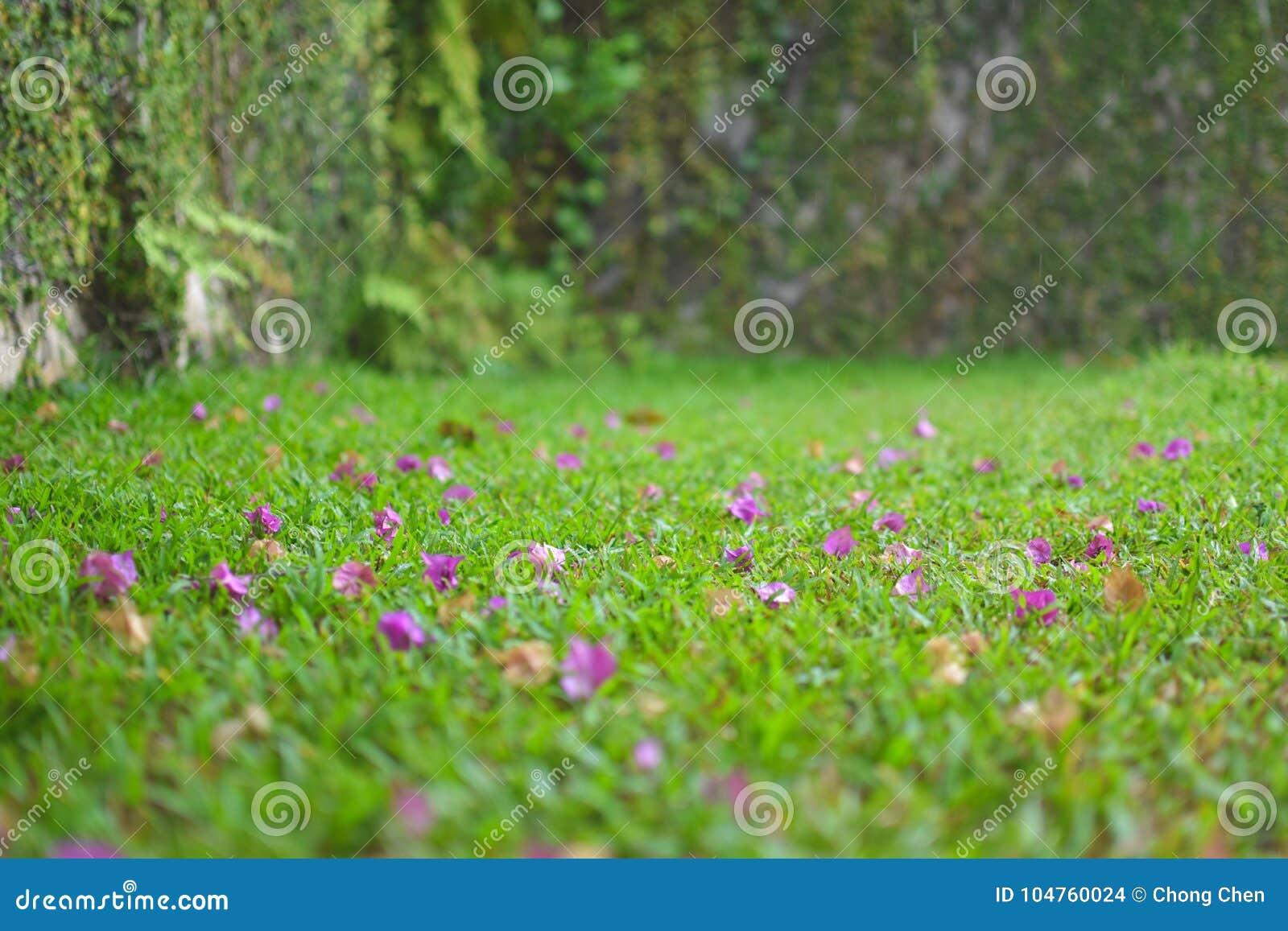 Petals drop on grass