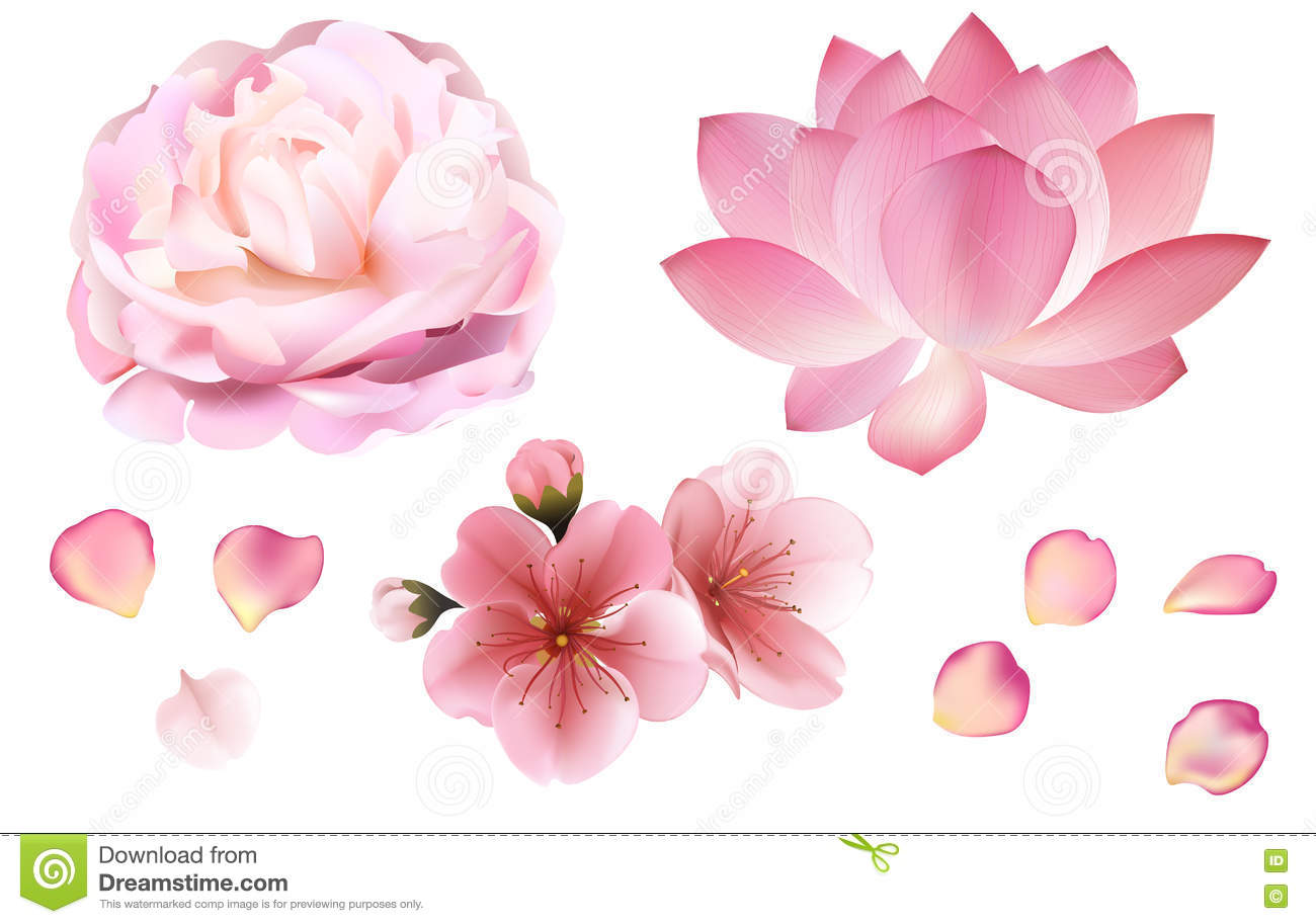 Petals and rose sakura peony and lotus flowers on white background petals and rose sakura peony and lotus flowers on white background izmirmasajfo