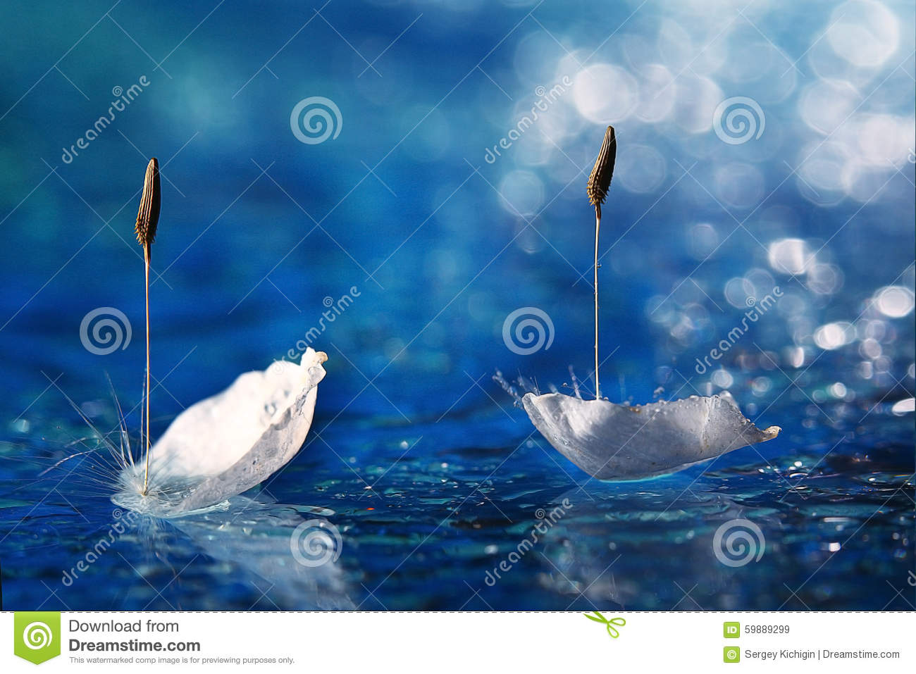 Petals in water like two swan in pond