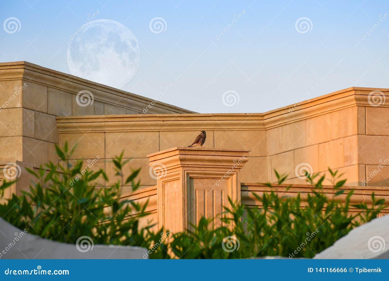 Petit aigle se reposant sur un pilier de mur de briques avec la grande pleine lune