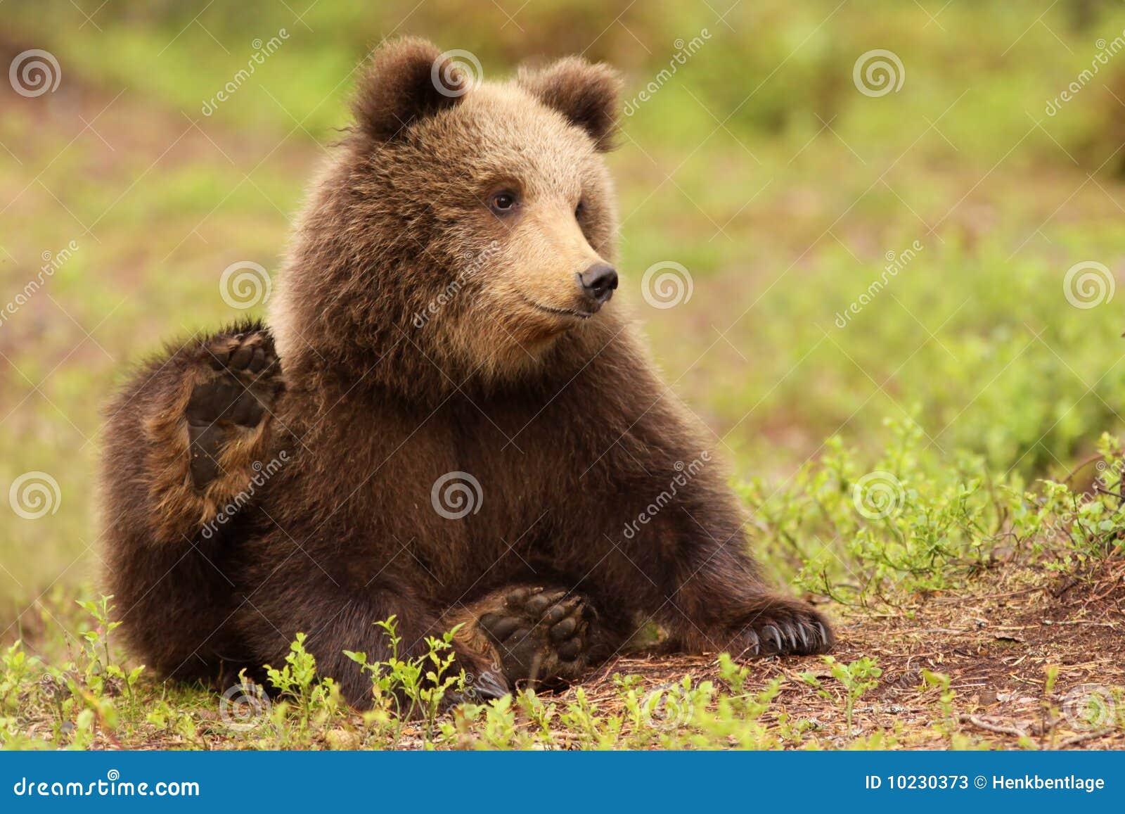 petit animal d 39 ours brun mignon image stock image du ours fourrure 10230373. Black Bedroom Furniture Sets. Home Design Ideas