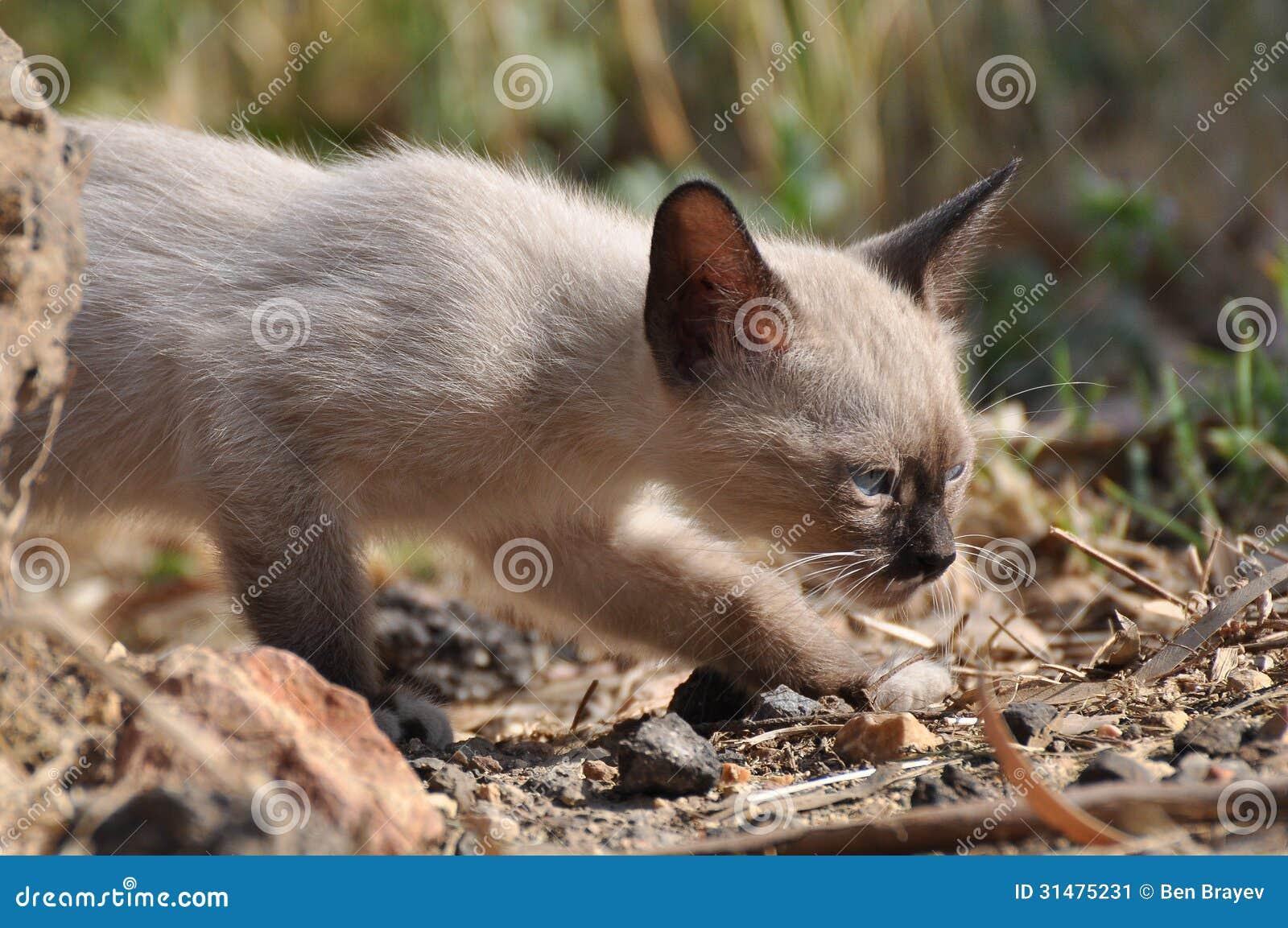 Petit animal de chat