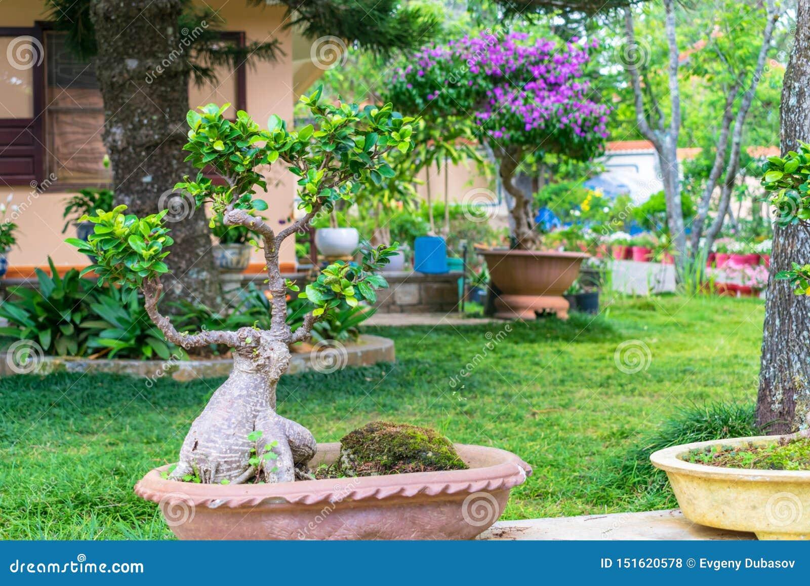 Petit arbre d ikebana dans un pot avec un tronc étonnant en parc