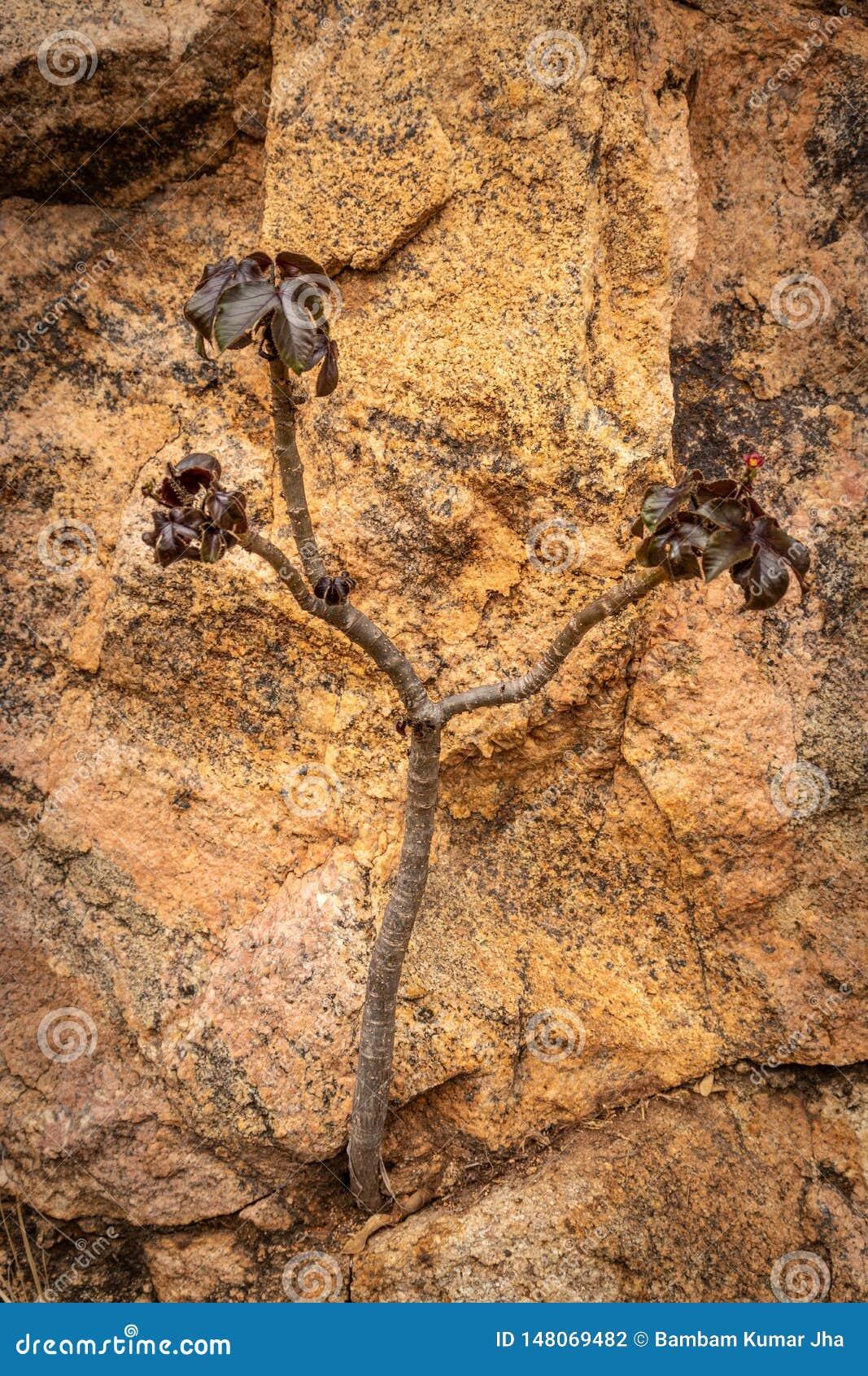 Petit arbre d isolement montrant la puissance de la nature