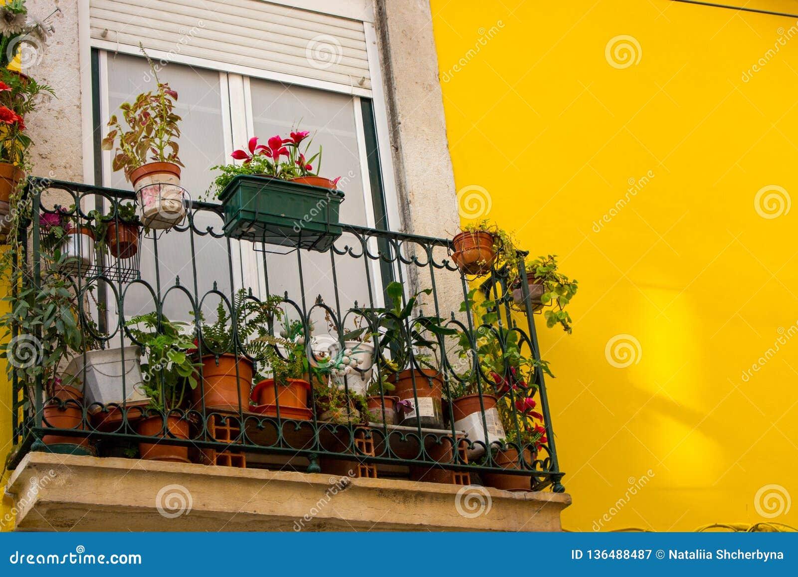 Decoration Petit Pot De Fleur petit balcon avec des pots de fleur contre le mur jaune