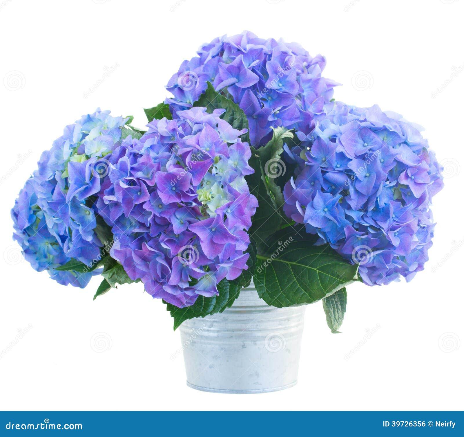 Très Petit Bouquet Des Fleurs Bleues De Hortensia Photo stock - Image  KO45