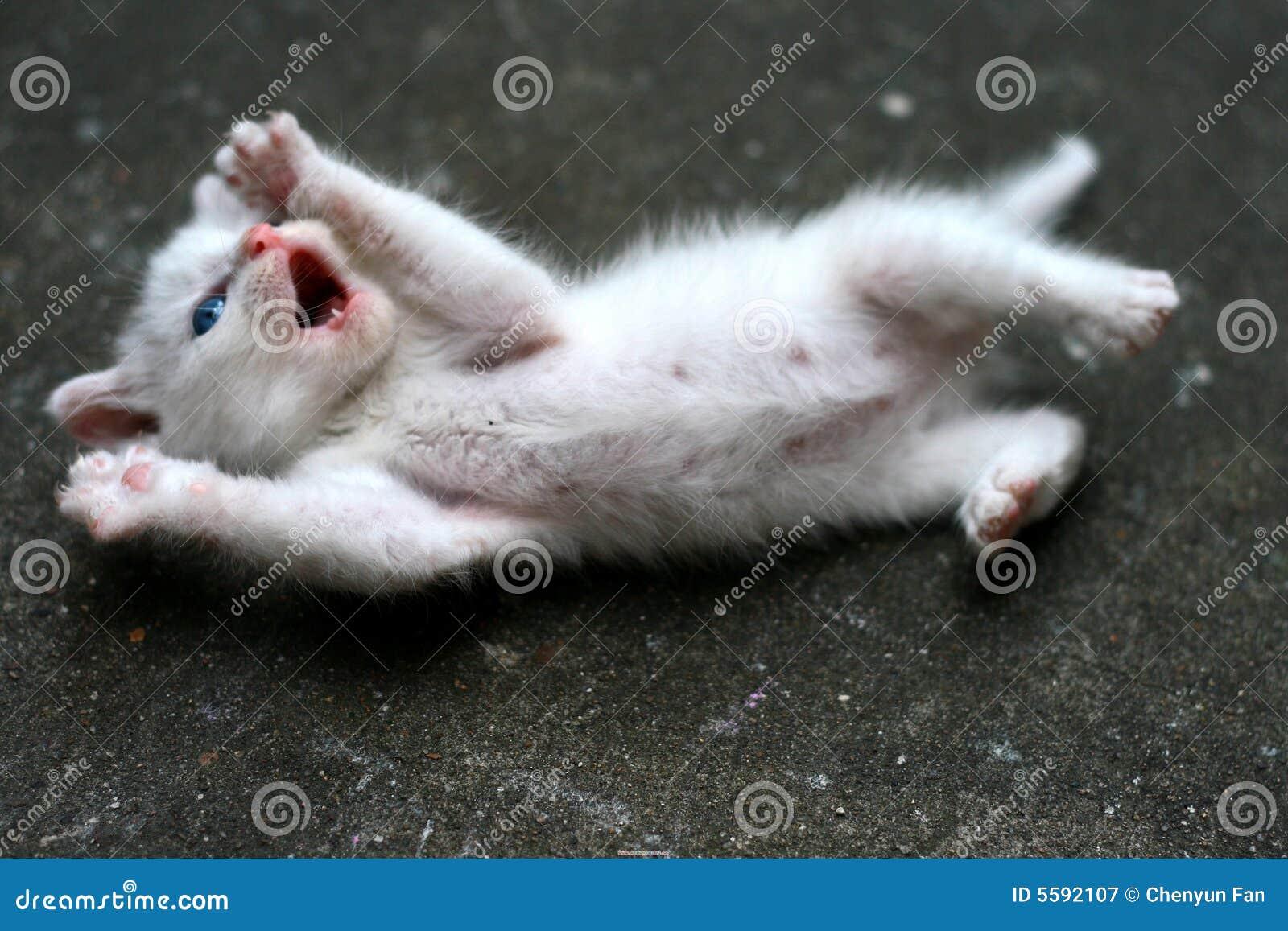 Petit chat mignon image stock image du mignon fourrure - Image de petit chat ...