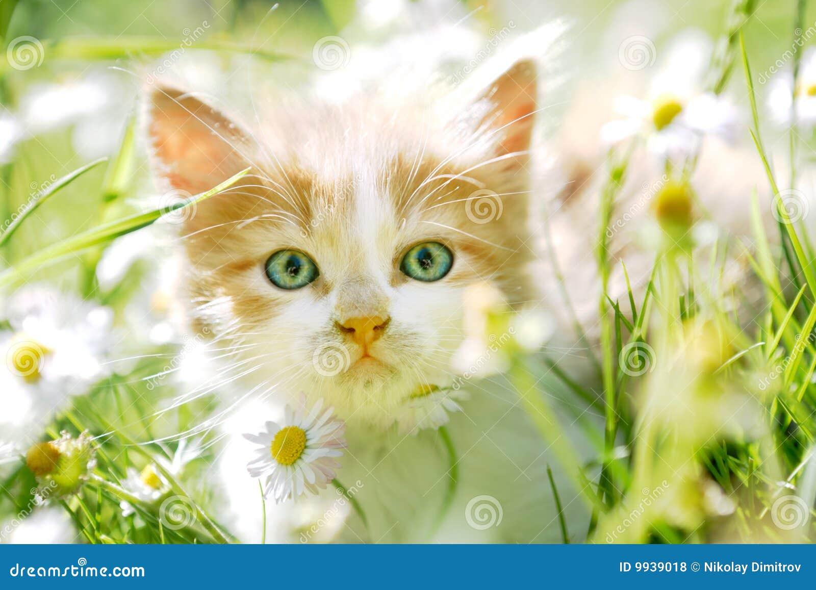 petit chat mignon avec les yeux verts dans l 39 herbe verte photo stock image du mammif re ch ri. Black Bedroom Furniture Sets. Home Design Ideas