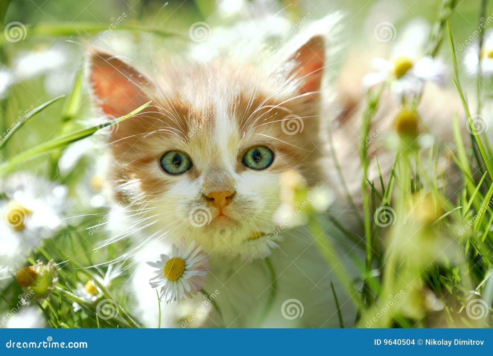 petit chat mignon dans l 39 herbe verte photo stock image du ch ri gibier 9640504. Black Bedroom Furniture Sets. Home Design Ideas