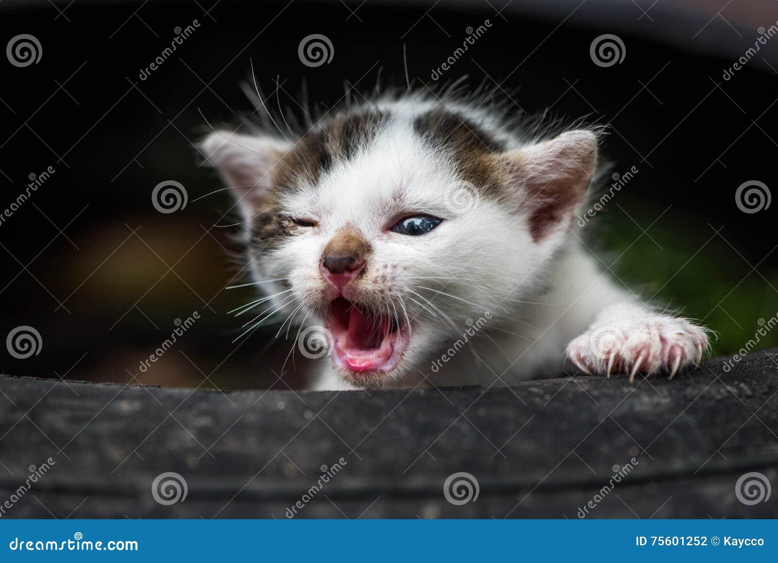 Petit chat mignon de bébé