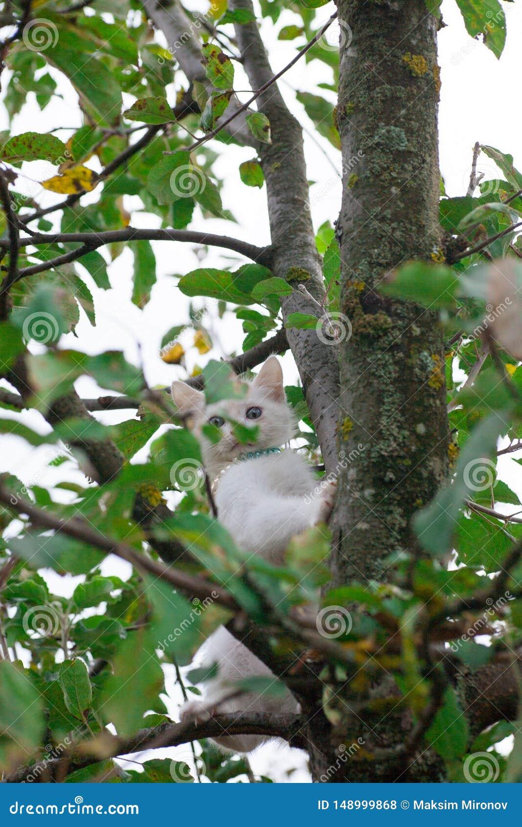 Petit chat sur le plan rapproch? d arbre