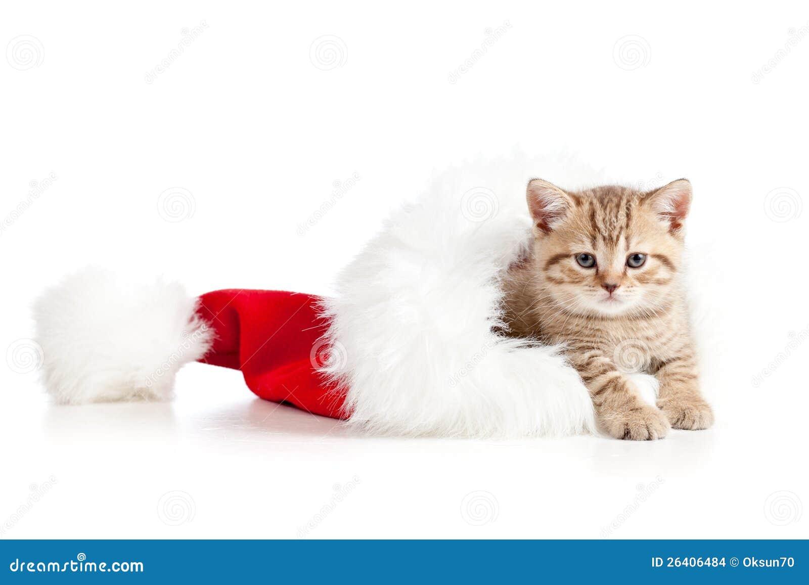 Petit chaton de chat dans un chapeau du p re no l photo stock image du charmer chapeau 26406484 - Image de chat de noel ...
