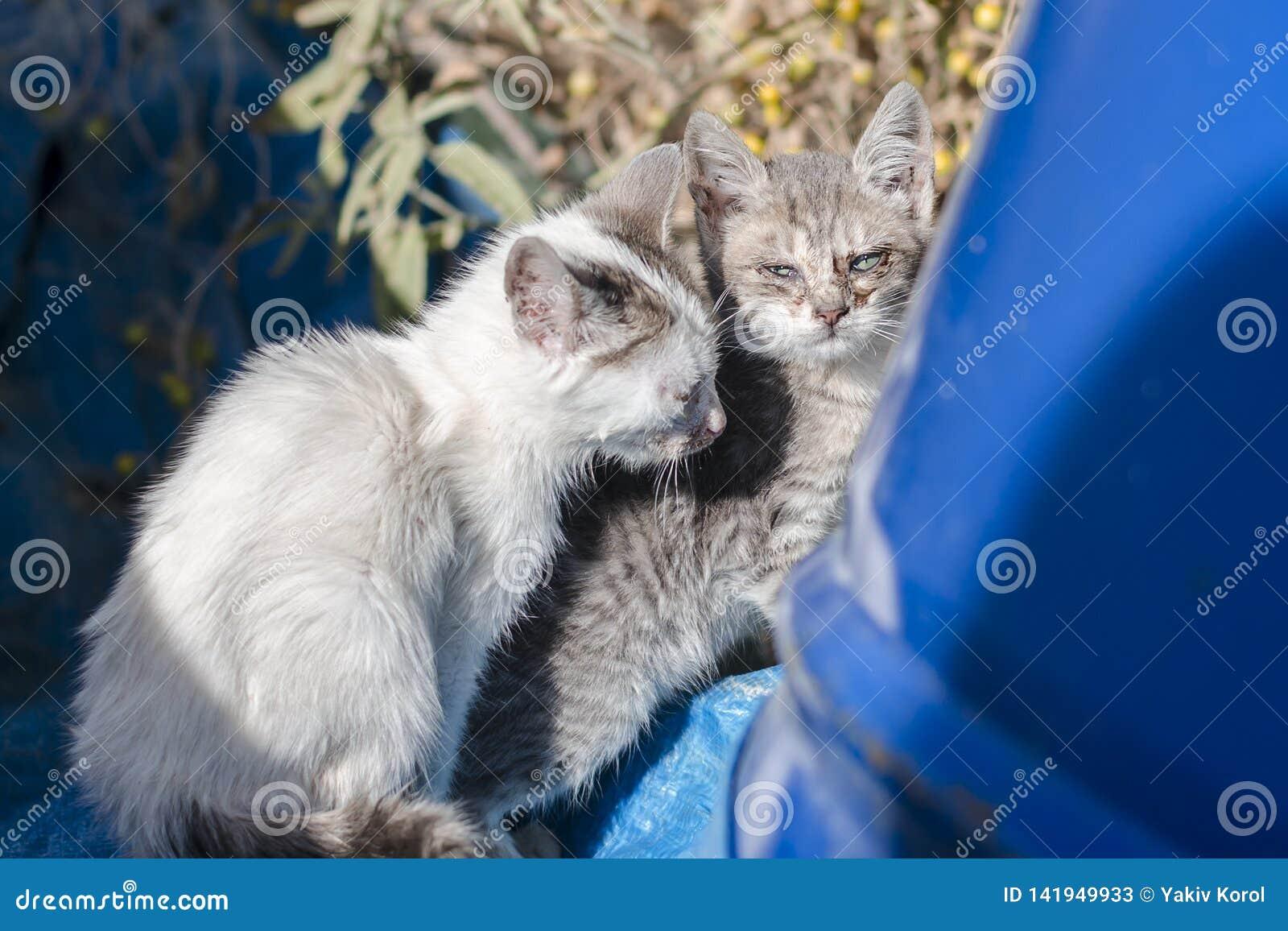 Petit chaton deux sans abri affamé blanc-gris avec les yeux aigris près du baril bleu à Athènes, Grèce