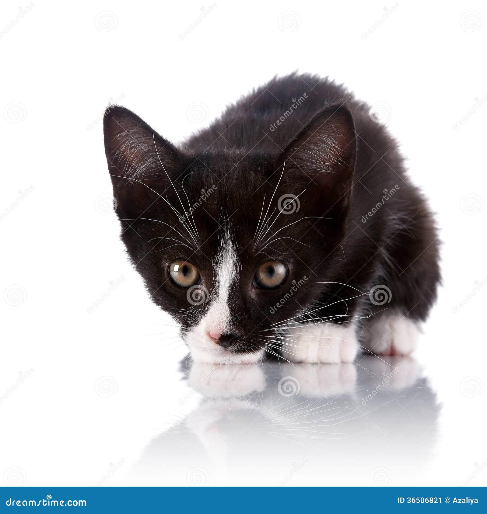 Petit chaton effrayé noir et blanc