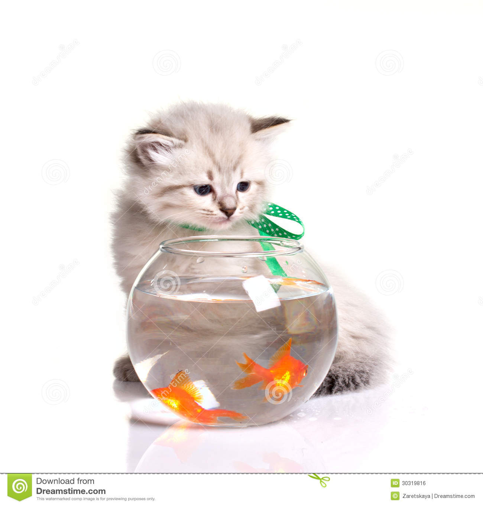 Petits chaton et poissons rouges photo stock image 30319816 for Pesce gatto acquario