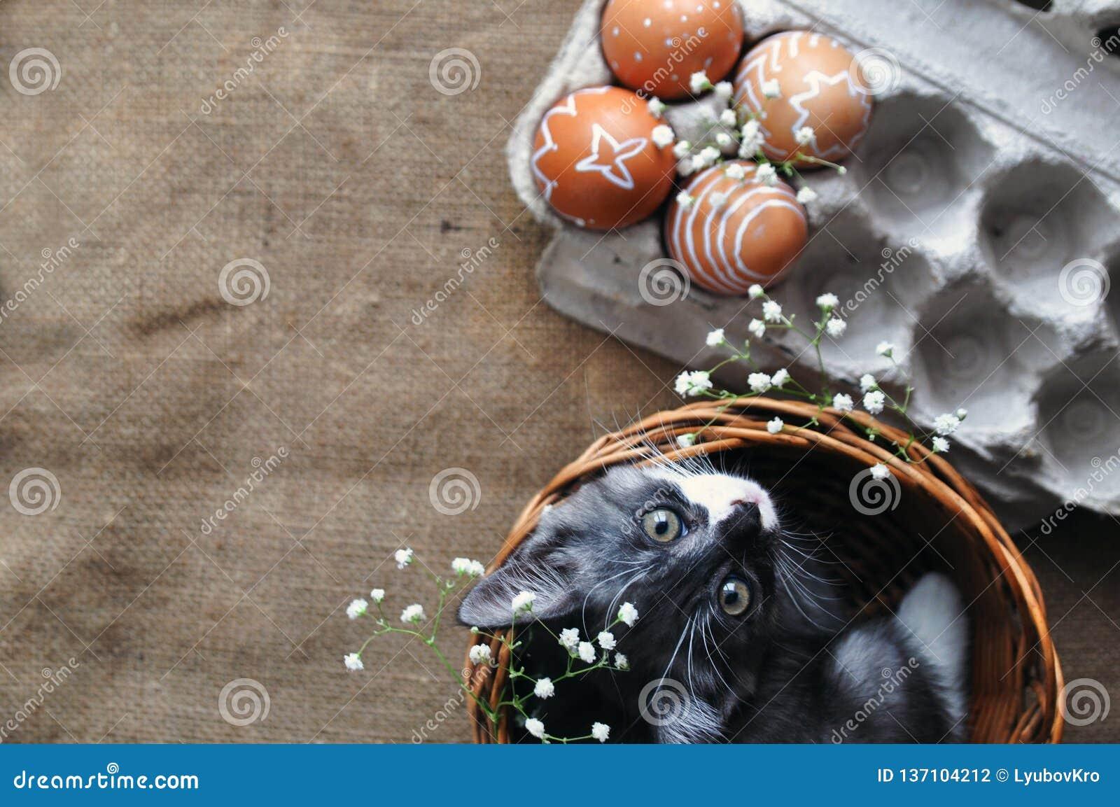 Petit Chaton Gris Mignon Dans Un Panier En Osier Et Oeufs De Pâques