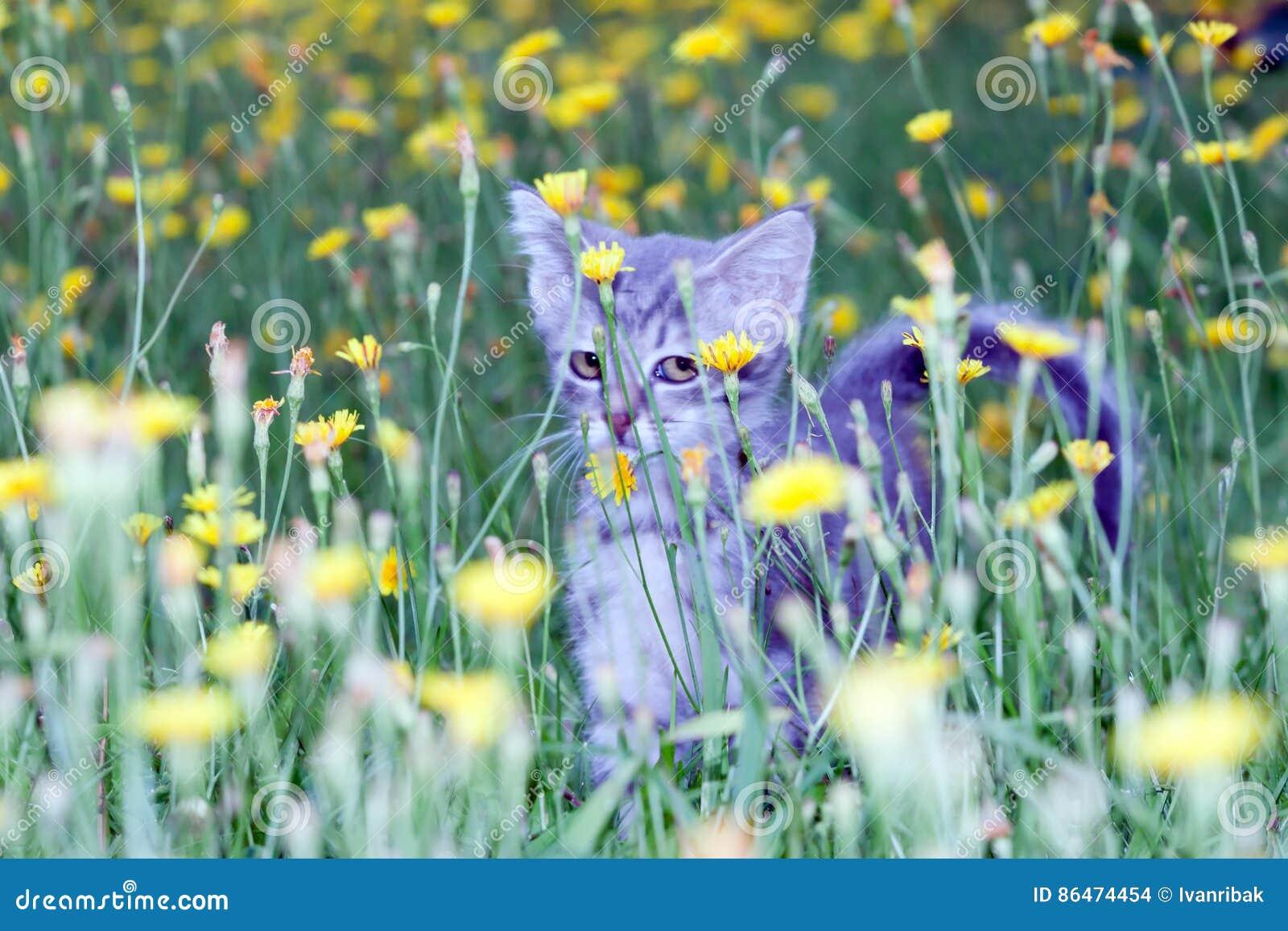 Petit chaton maladroit sur