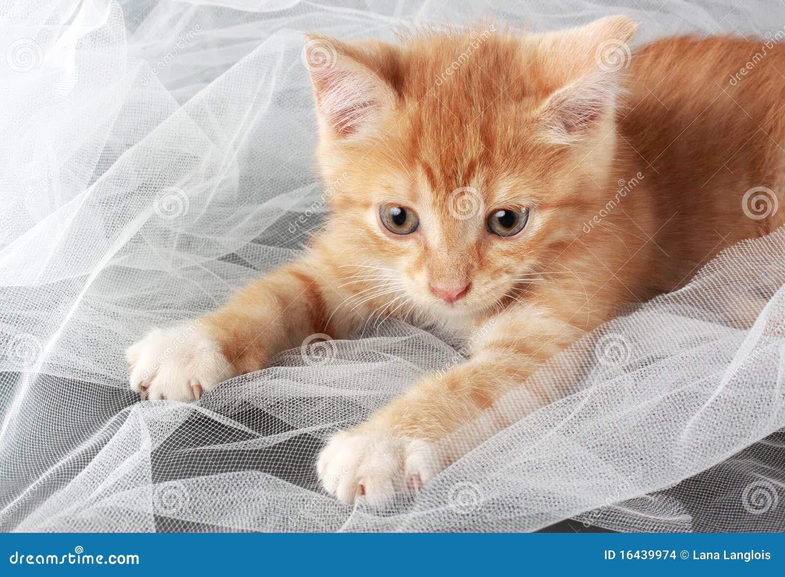 petit chaton mignon photo stock image du mignon jeune 16439974. Black Bedroom Furniture Sets. Home Design Ideas