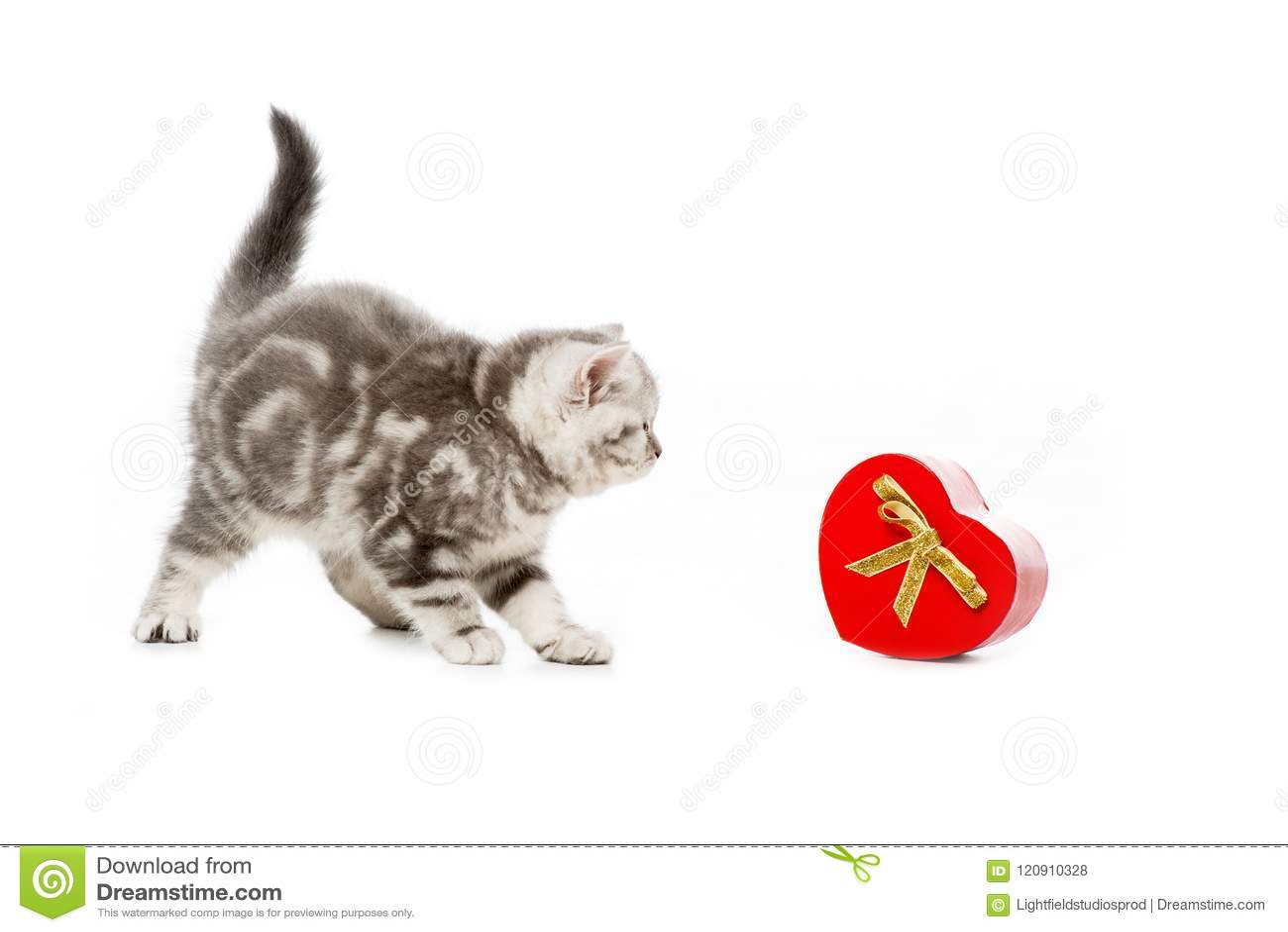 Petit chaton mignon avec le cadeau en forme de coeur