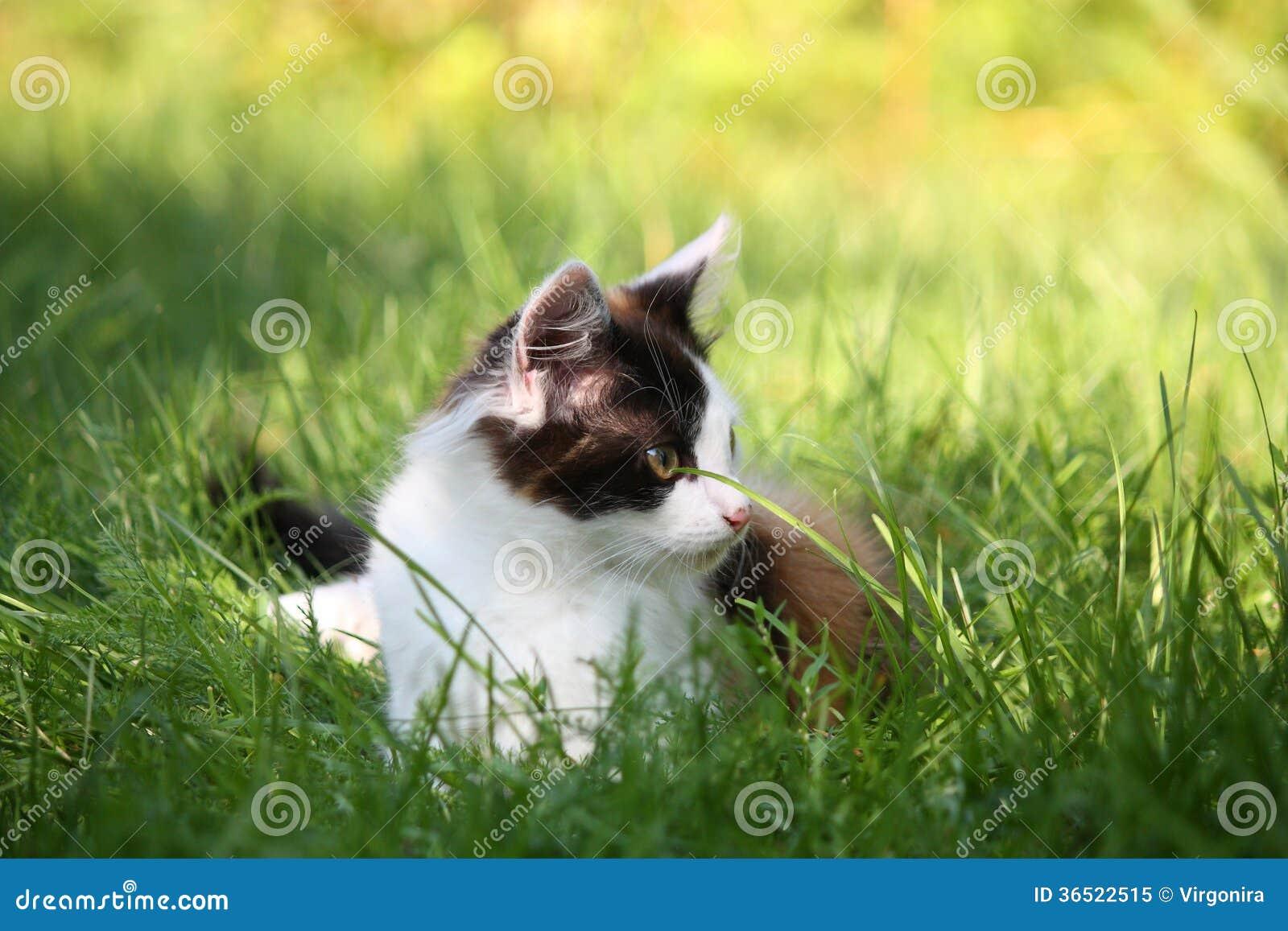 Petit chaton se reposant dans l herbe