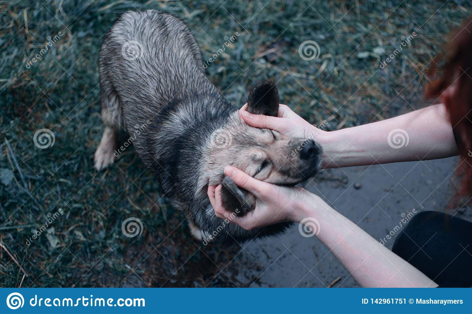 Petit chien humide qui frottent