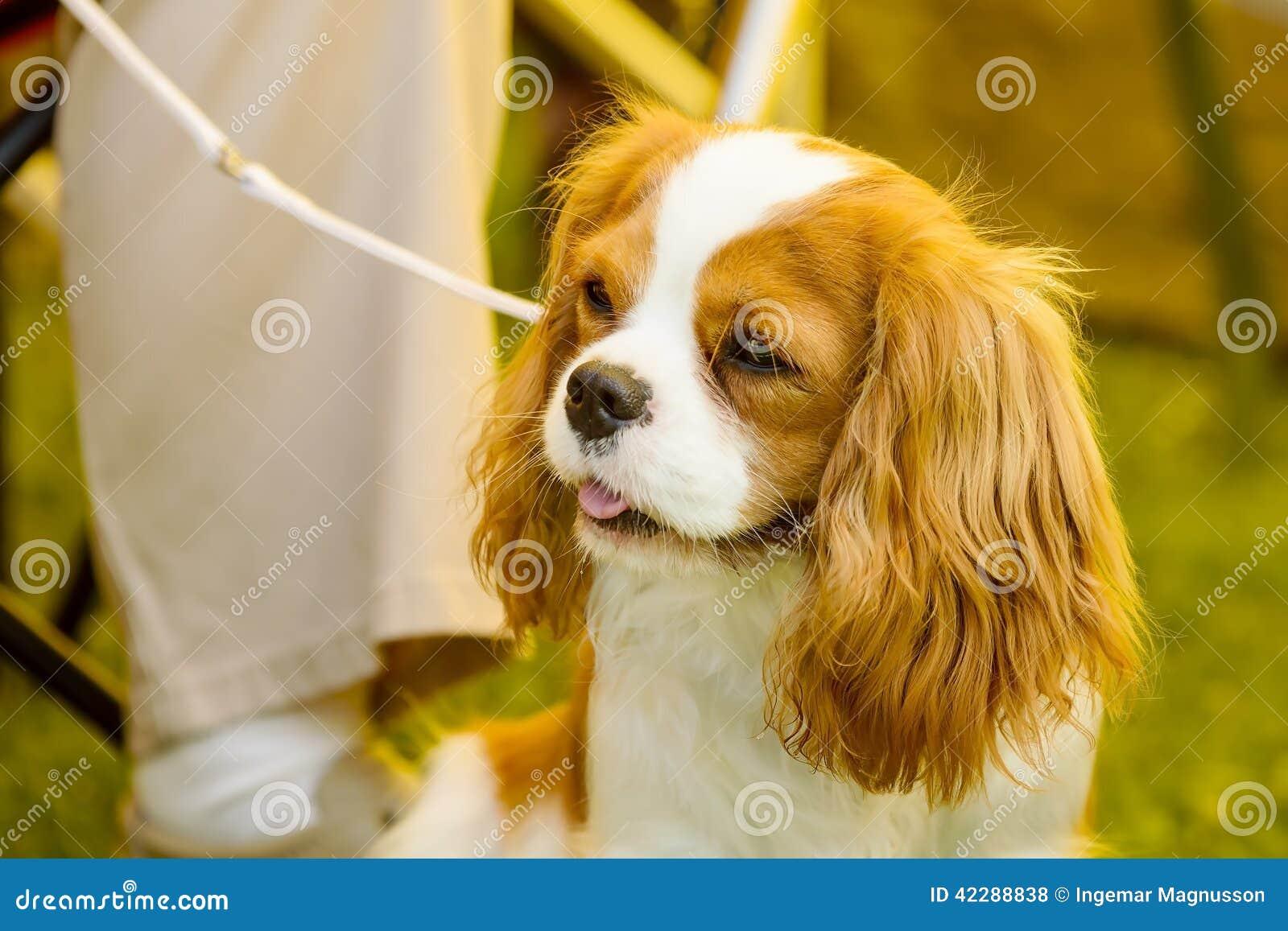 animal mignon petit chien - photo #28