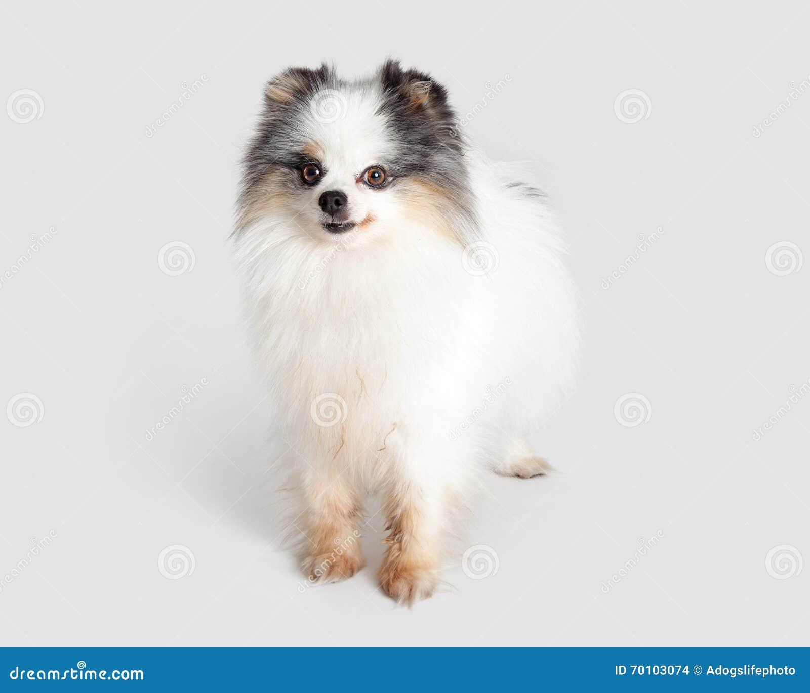 animal mignon petit chien - photo #24