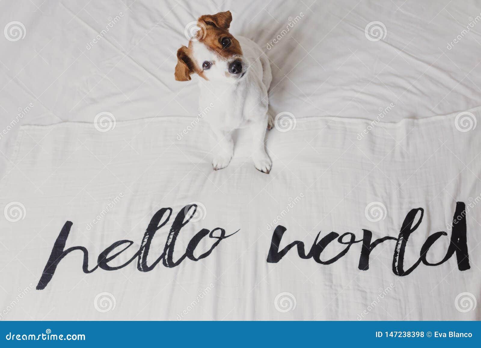 Petit chien mignon se reposant sur le lit feuille blanche avec bonjour le message du monde Animaux familiers ? l int?rieur d?tend