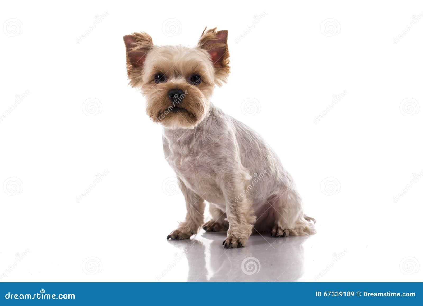 animal mignon petit chien - photo #35