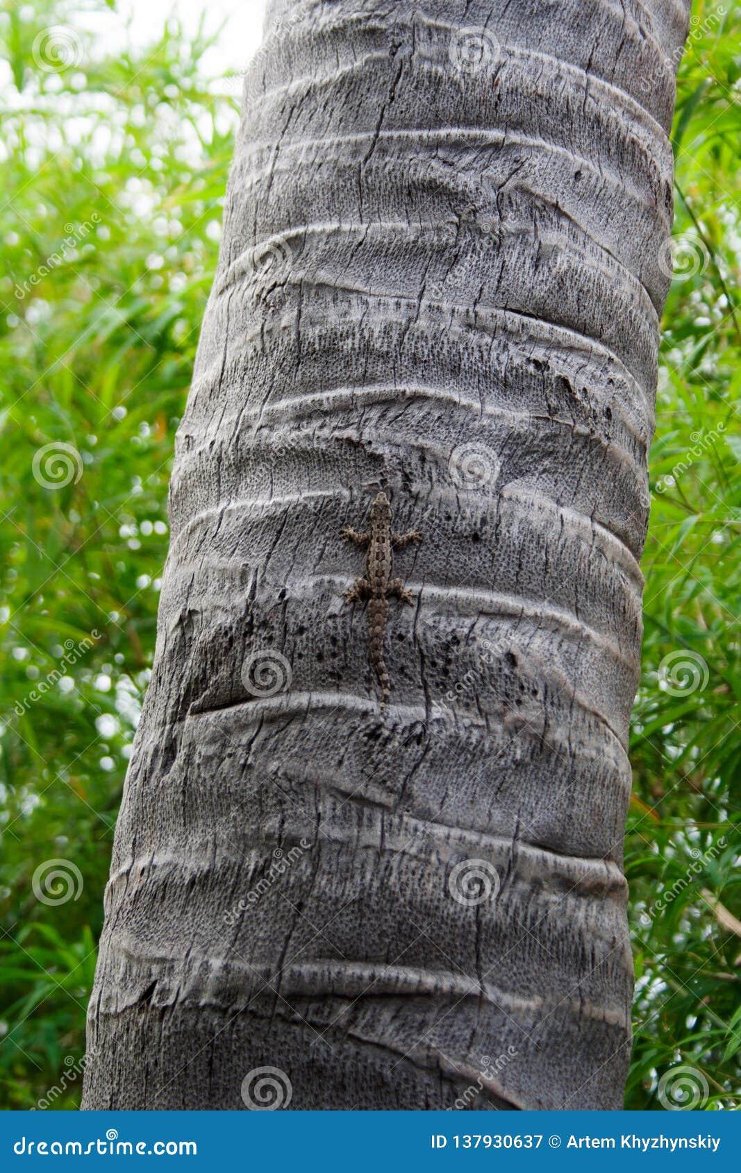 Petit gecko gris brun se reposant sur le tronc d arbre
