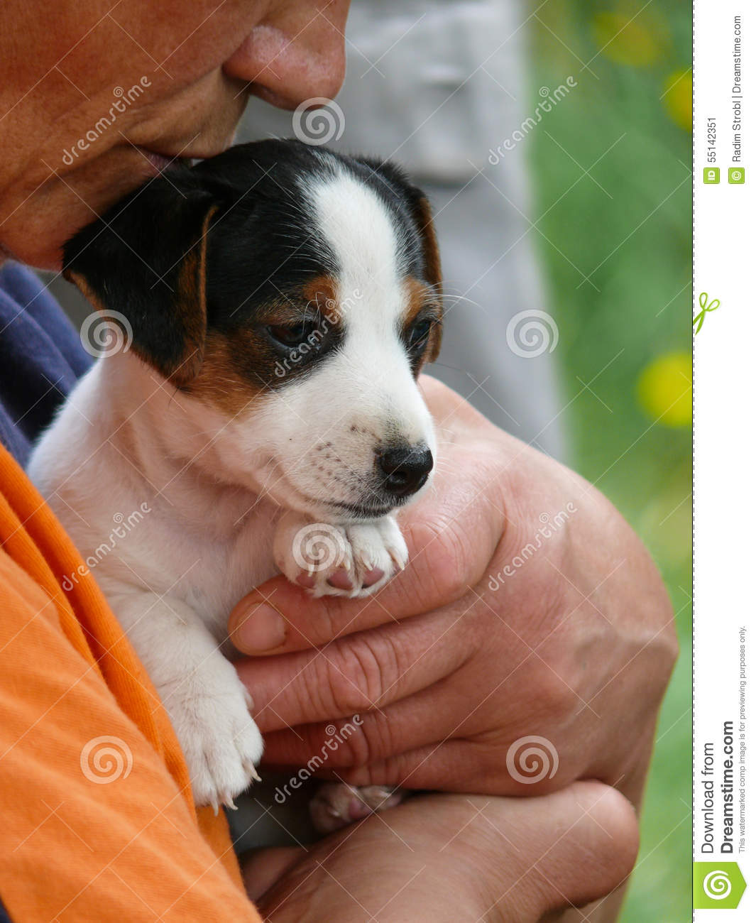 Petit Jack Russell Terrier Puppy