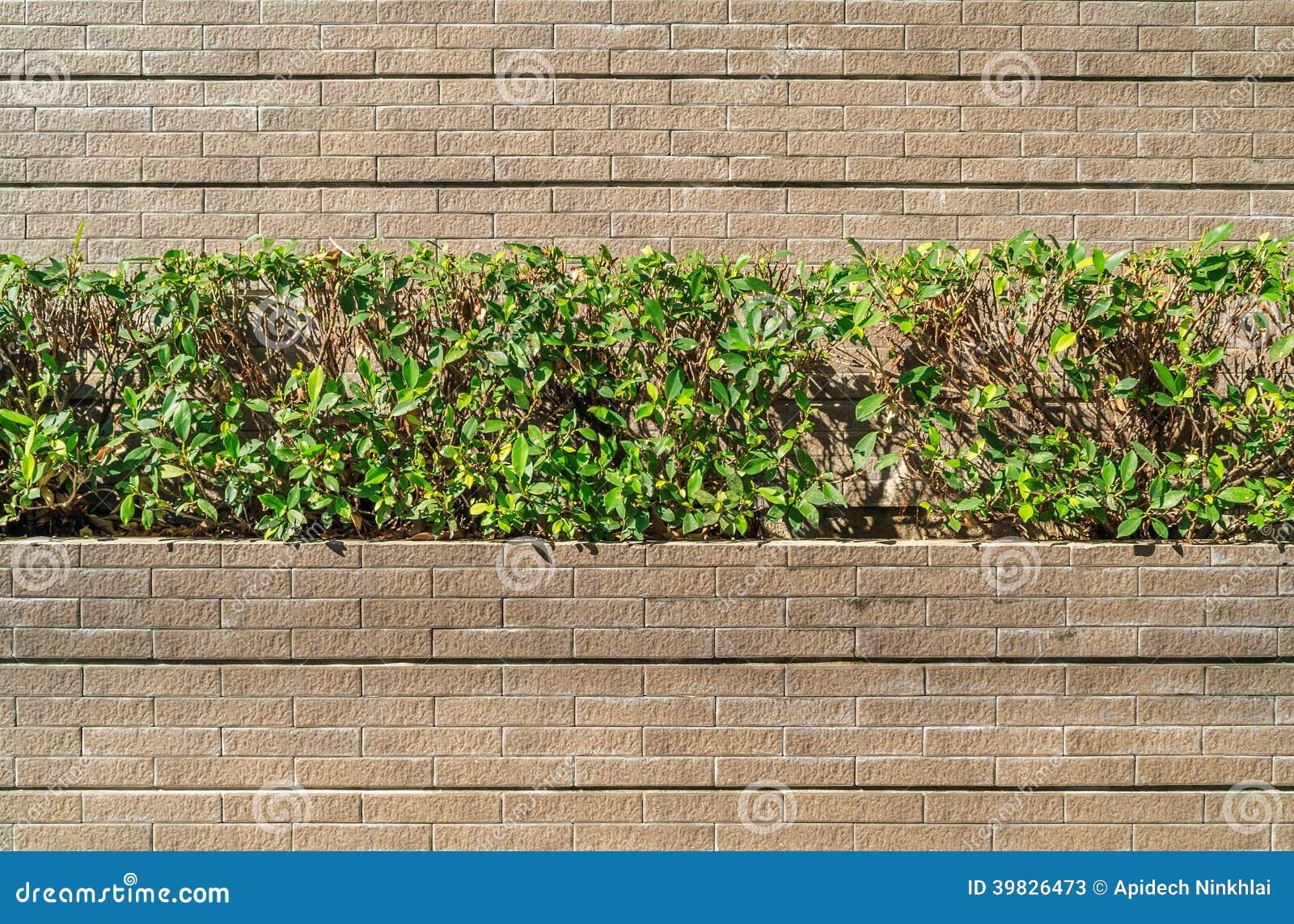 Petit jardin sur le mur en pierre de granit image stock for Mur de galets jardin