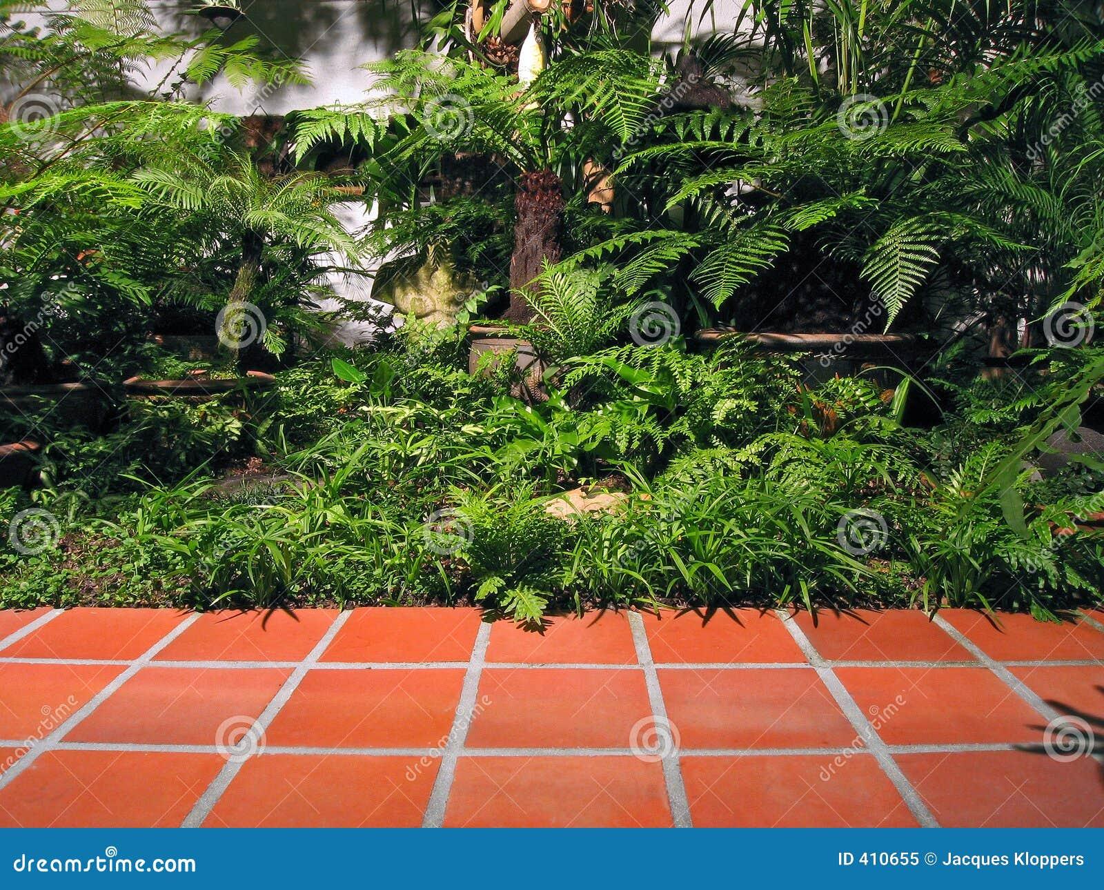 Petit Jardin Urbain Tropical Image Stock Image Du Arbuste Ombre