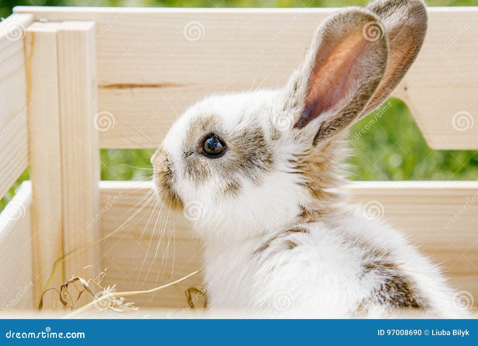 Petit lapin dans la boîte