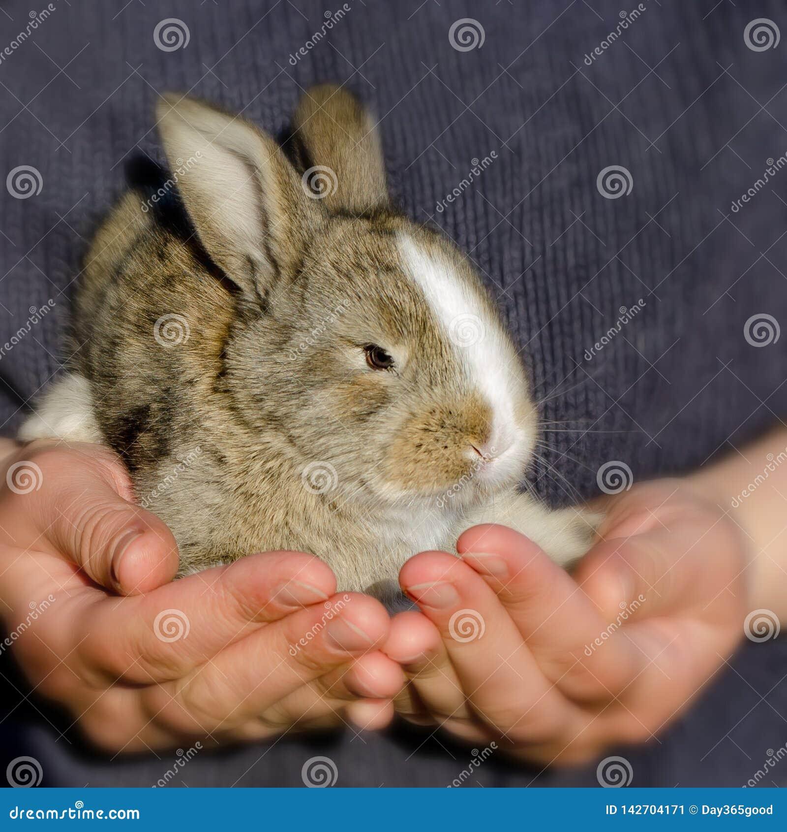 Petit lapin dans les mains Fille tenant un lapin dans des ses bras
