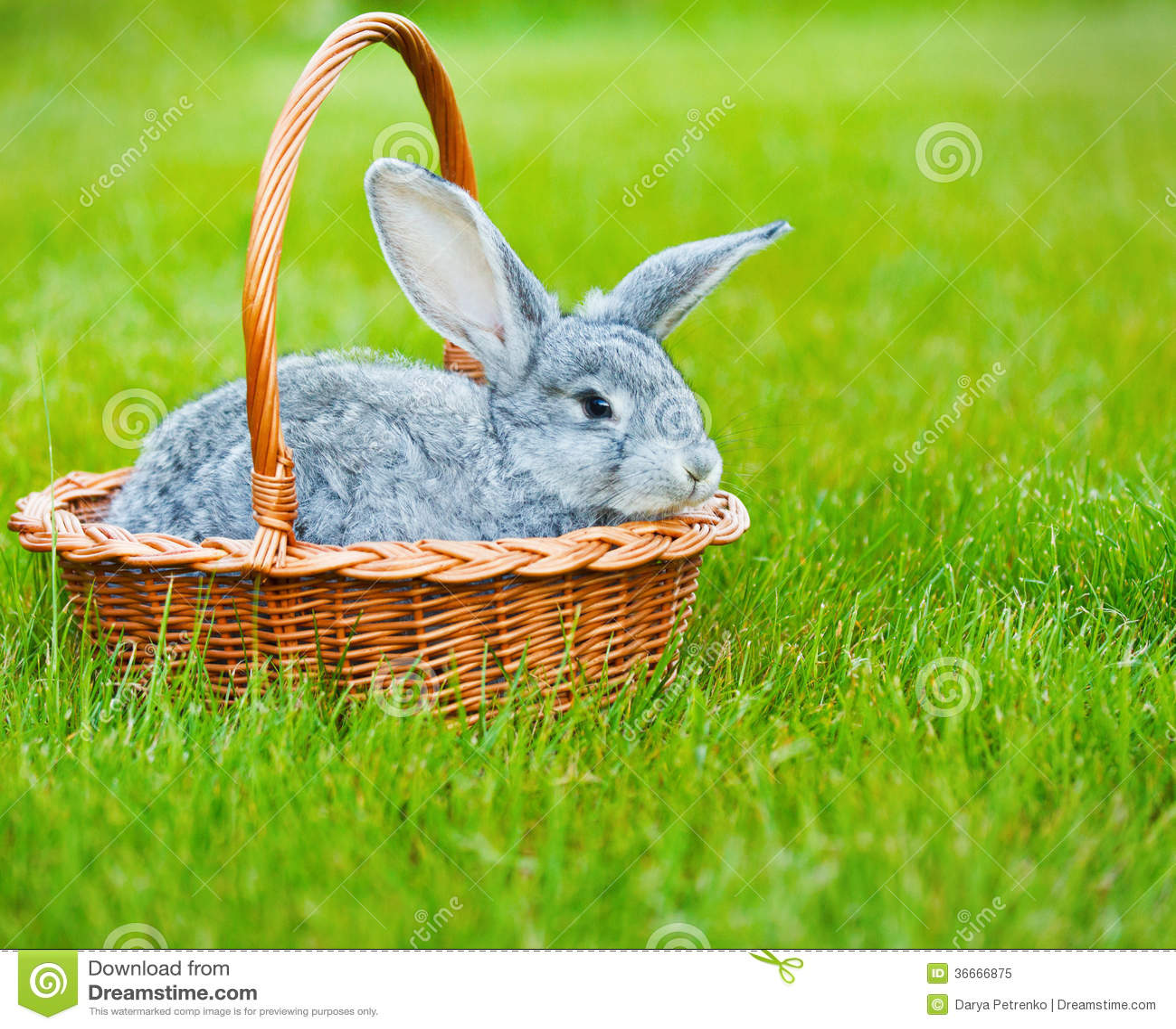 Petit lapin gris mignon sur l herbe verte