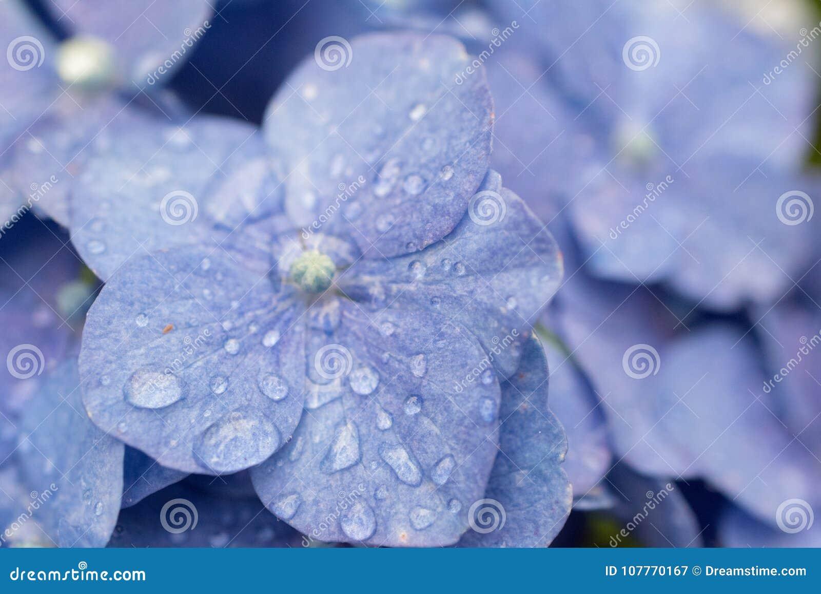 Petit macro superbe d une fleur bleue