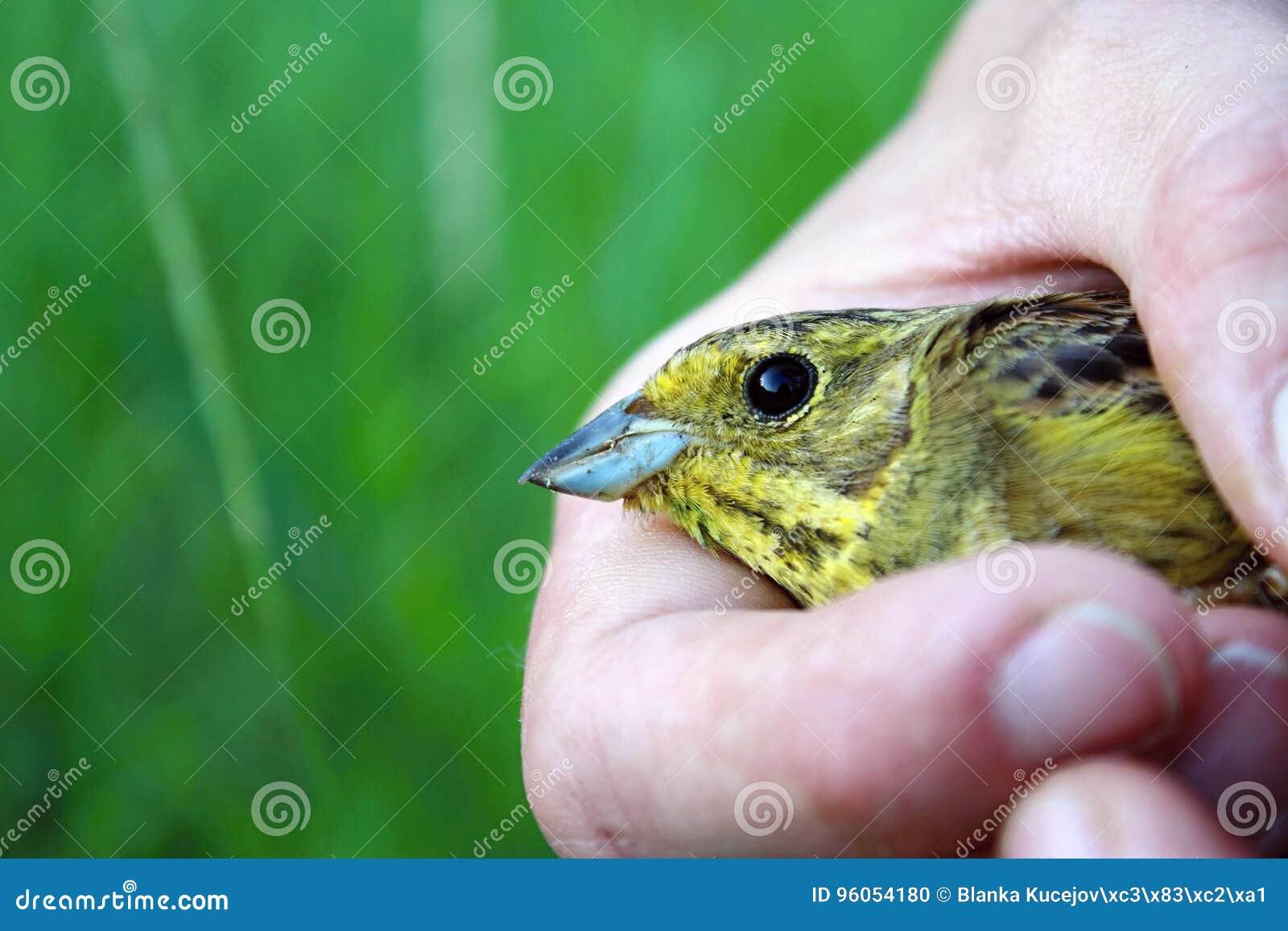 Petit oiseau dans des mains