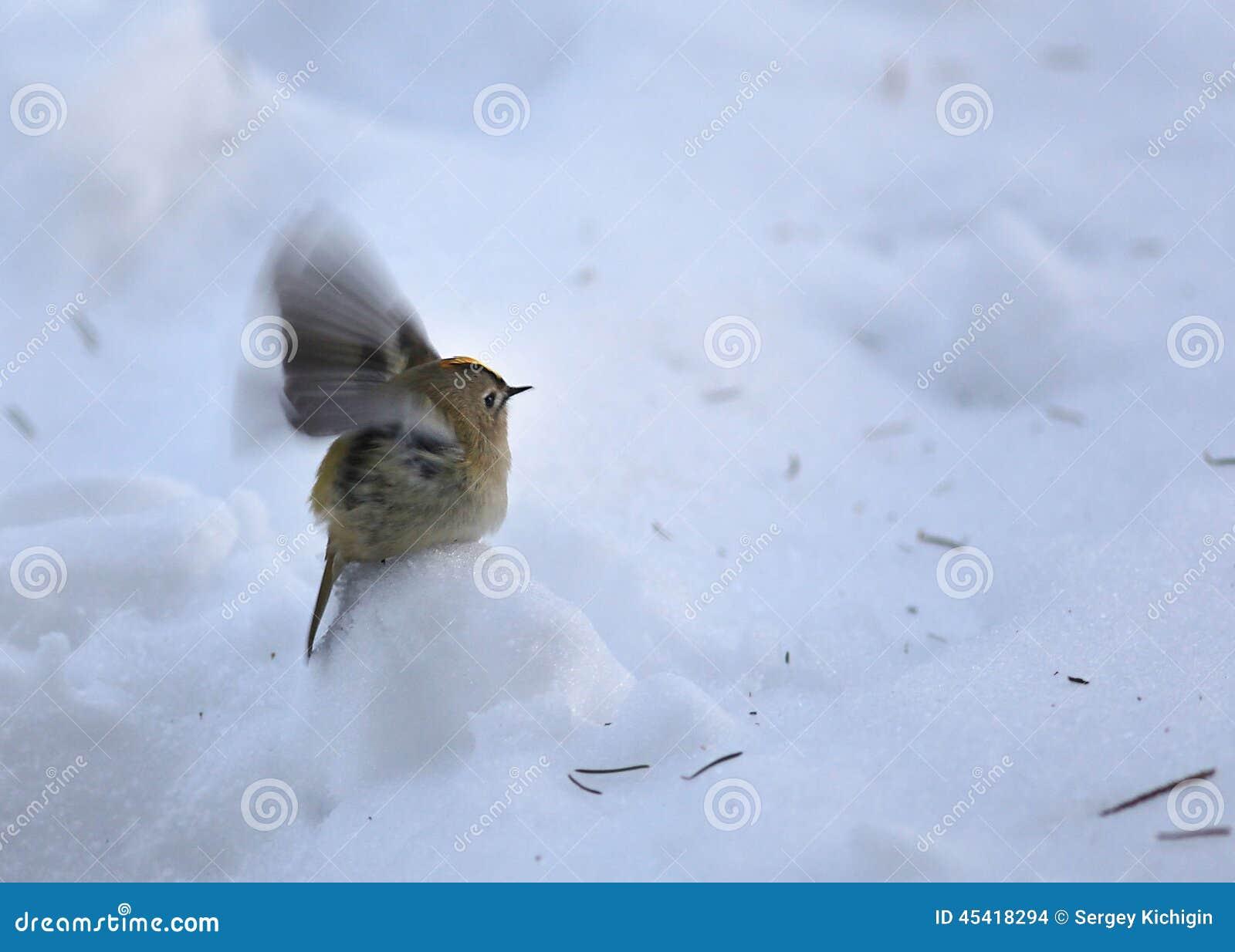 petit oiseau pendant l 39 hiver froid photo stock image du alimenter no l 45418294. Black Bedroom Furniture Sets. Home Design Ideas