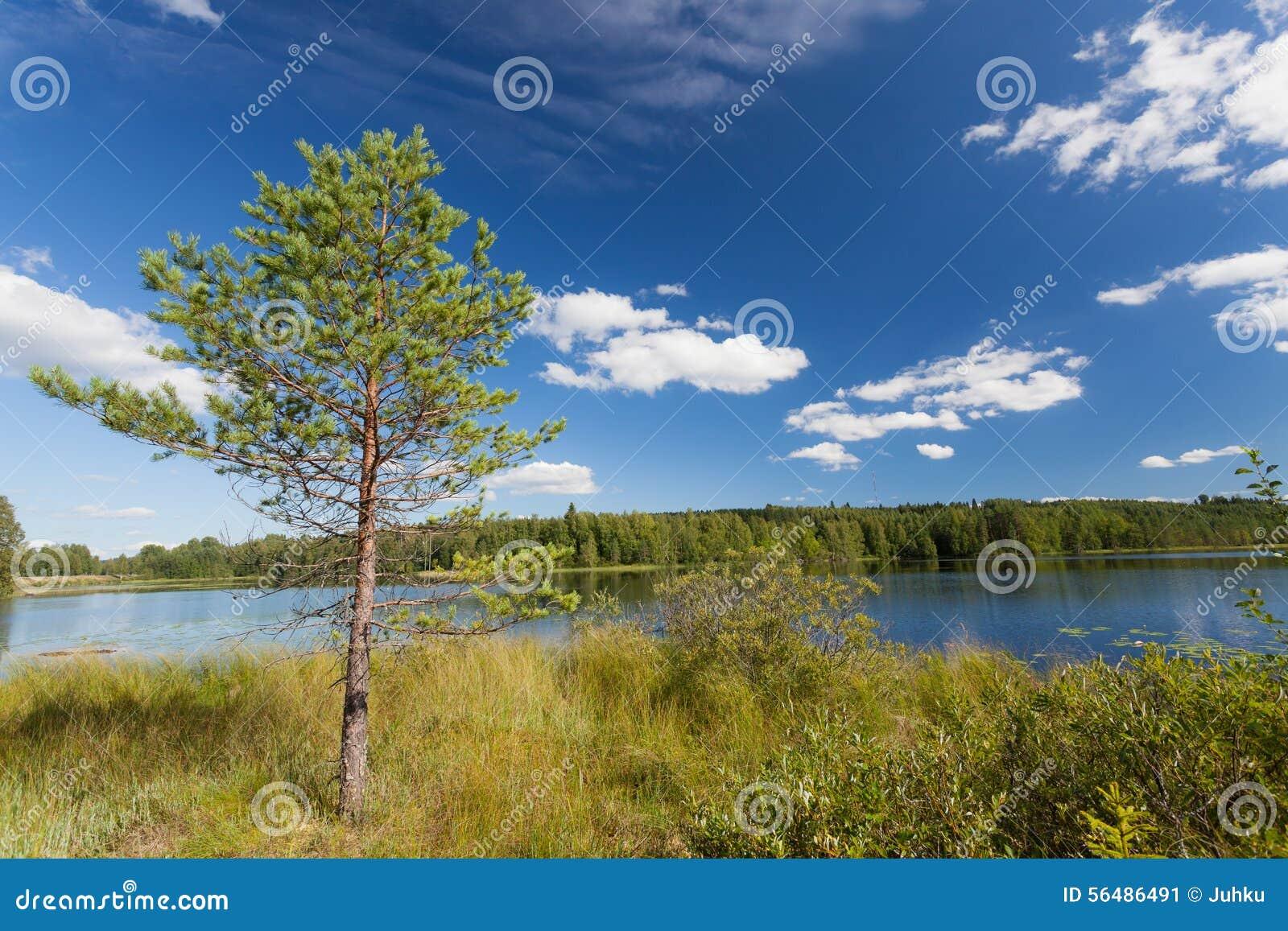 Petit pin près de lac