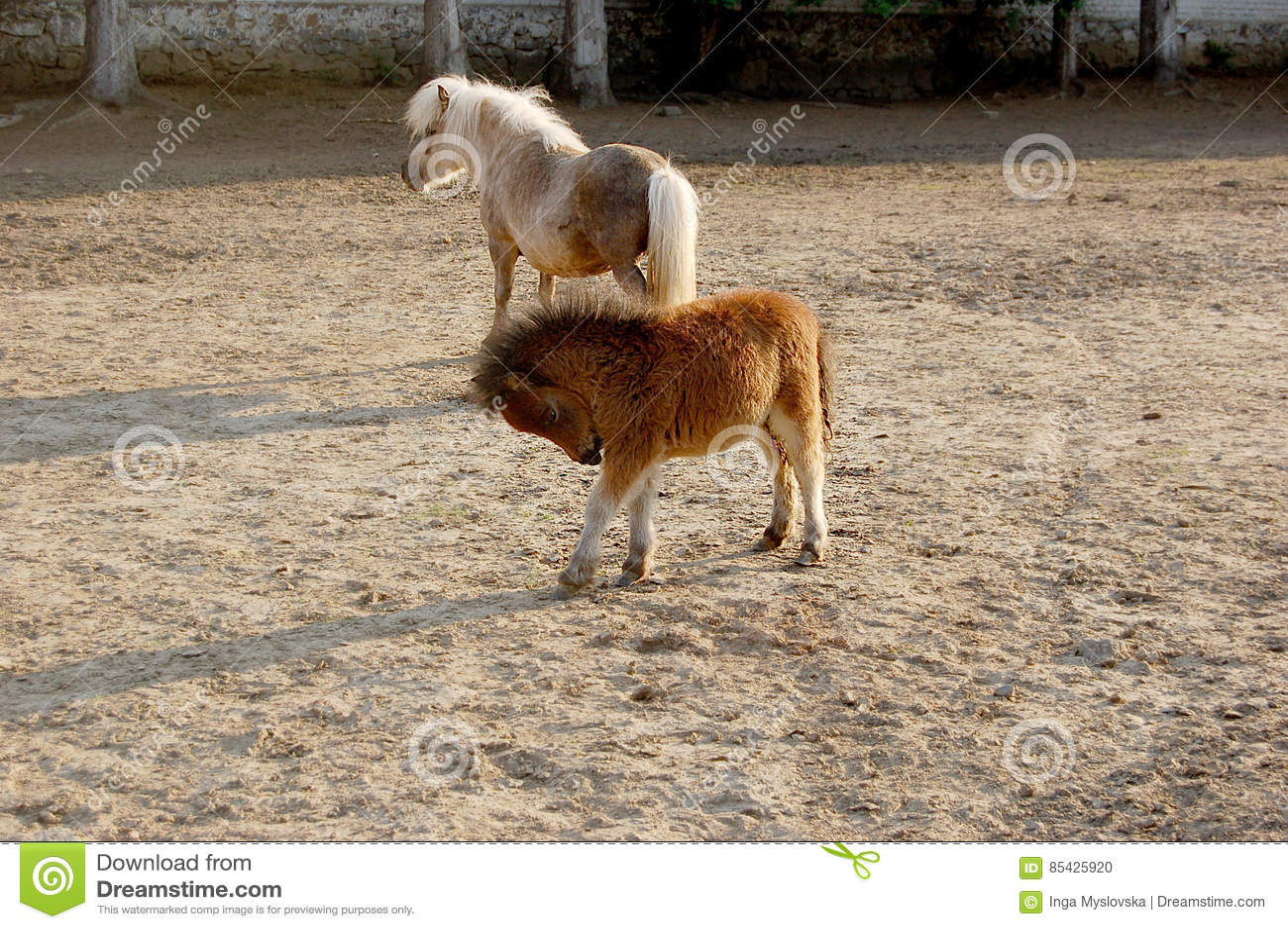 Petit poney dans le pré