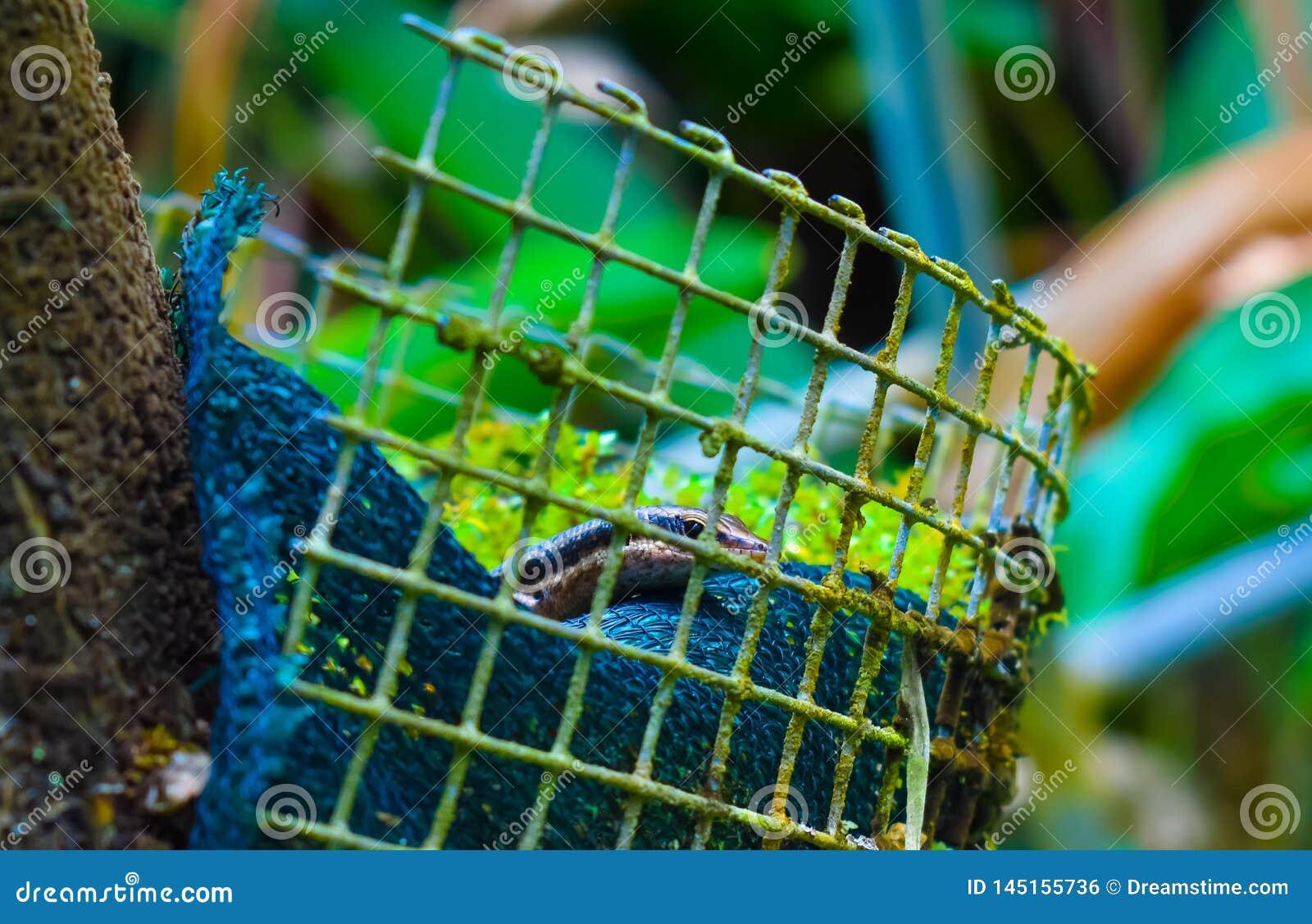 Petit reptile, Seychelles |Jardin botanique