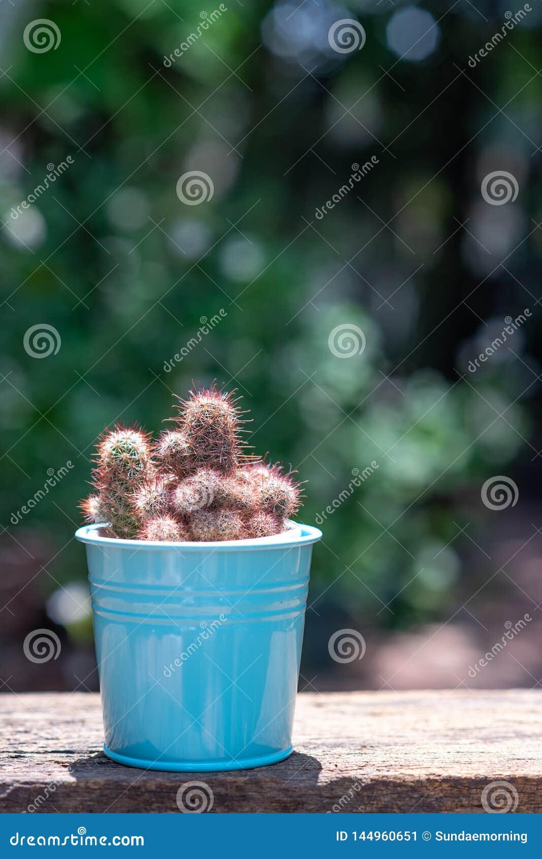 Pot Plante En Bois petit succulent, cactus, plantes en pot d?coratives sur la