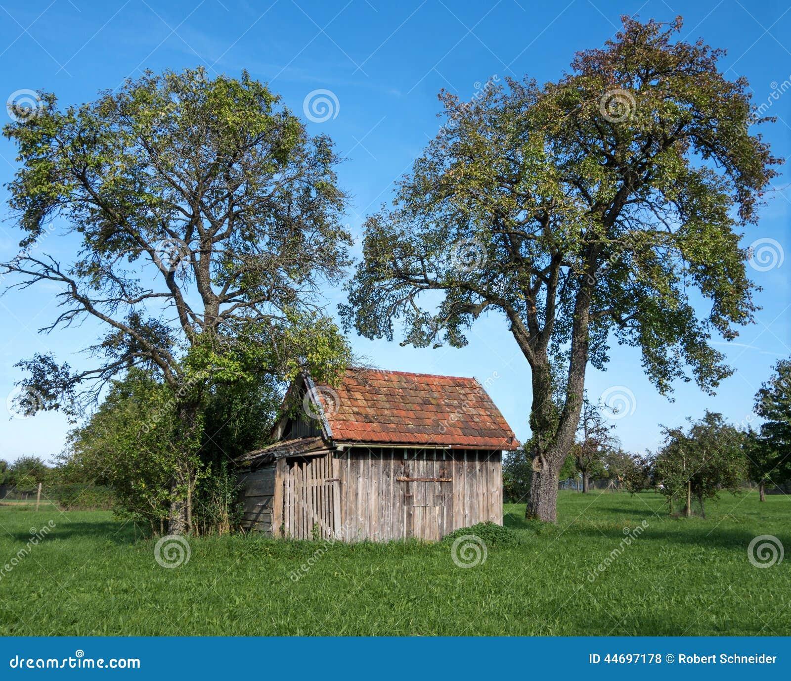 Petite Cabane En Bois Sous Les Arbres Fruitiers Photo stock  Image