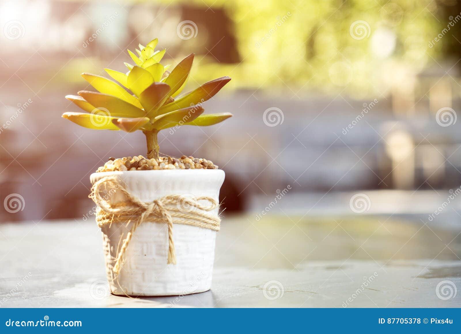 Petite décoration de pot d arbre sur la table avec la lumière du soleil lumineuse