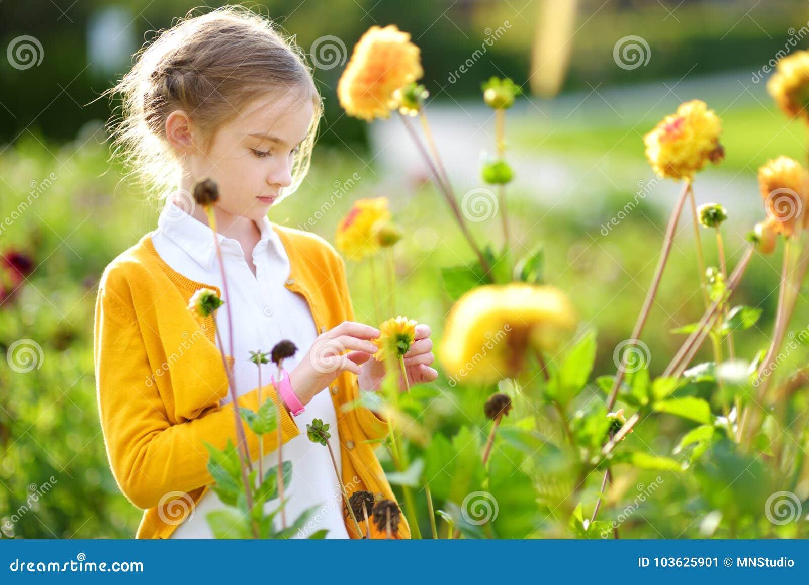 Petite fille mignonne jouant dans le domaine se développant de dahlia Enfant sélectionnant les fleurs fraîches dans le pré de dah